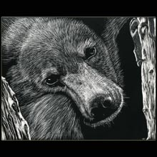 Bear, scratchboard, drawing,                     Underwood