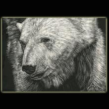 Polar Bear, Bear, Scratchboard, drawing,                   Underwood