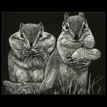 Chipmunks, scratchboard, drawing, Underwood