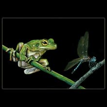 frog,dragonfly, color pencil, drawing, Underwood