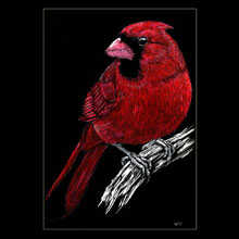 cardinal, scratchboard, drawing, Underwood