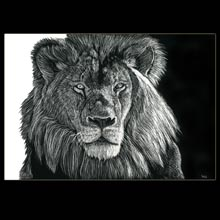 Lion, scratchboard, drawing, Underwood