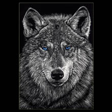 blue eyed wolf, wolf, scratchboard,                           drawing, Underwood