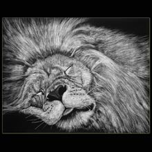 Sleeping Lion, Lion, drawing, scratchboard,                 Underwood