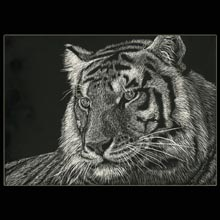 White                 Tiger, tiger, scratchboard, drawing, Underwood