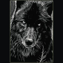 Black                 wolf, wolf, scratchboard, drawing, Underwood