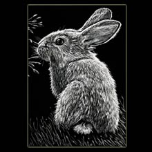 Bunny, Rabbit, Scratchboard, Drawing,                         Underwood