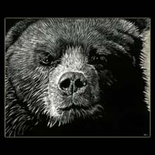 Kodiak Bear, Bear, Scratchboard, Drawing,                   Underwood