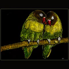 Lovebirds, Scratchboard, Underwood