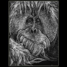 Scratchboard,                             Orangutan, drawing, Underwood