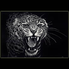 leopard, scratchboard, big cat, Underwood