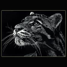 BIg Cat                 Wildlife, scratchboard, drawing, Underwood