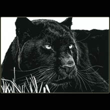 Black Leopard, Scratchboard, Drawing, Big                       Cat, Undewood