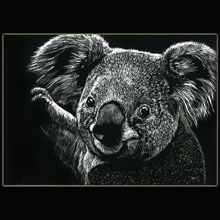 koala,                       scratchboard, drawing, Underwood
