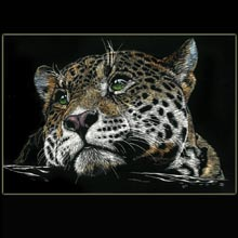 Leopard, Scratchboard, Drawing, Underwood