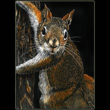 Squirrel, scratchboard drawing, Underwood