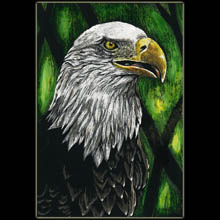 Bald Eagle,                 Underwood, Scratchboard, Birds, Wildlife