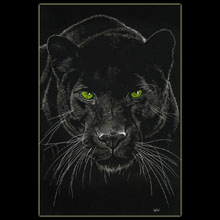 Panther, Big Cat, Scratchboard, Underwood