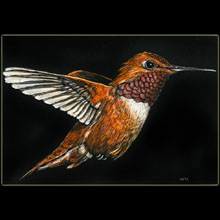 hummingbird, scratchboard, Underwood, wildlife,                 bird