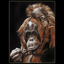 Orangutans, Big Apes, Scratchboard, Underwood