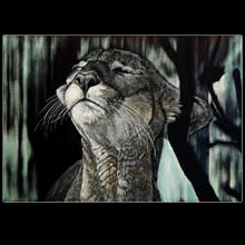Panther, scratchboard, drawing, wildlife,                         Underwood