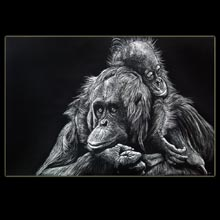 Orangutans, Drawing, Scratchboard,                         Underwood