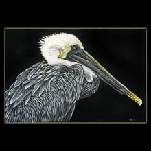 Pelican,                       scratchboard, drawing, Underwood