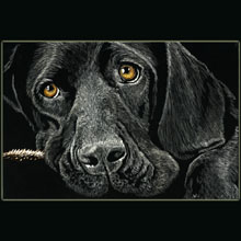 dog,                 scratchboard, Underwood, drawing, sad, eyes