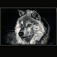 wolf,                   scratchboard, drawing, Underwood