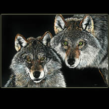 wolves, wolf,                 drawing, scratchboard, Underwood